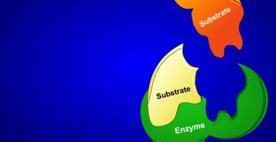 enzyme3